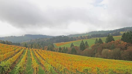 laranja : Vineyard Plantation with Grapes Bearing Vines with Autumn Fall Colors on the Rolling Hills in Dundee Oregon 1920x1080