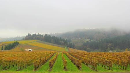 земледелие : Dundee Oregon Vineyards on Rolling Hills with Morning Fog and Misty Clouds in Fall Season Scenic View Time Lapse 1920x1080