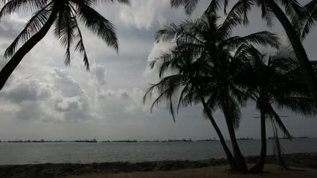 southeast : Singapore East Coast Beach with Palm and Coconut Trees Swaying in the Wind and Moving Clouds Time Lapse 1920x1080