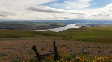 фехтование : Breathtaking View of Columbia River Gorge with Wild Flowers Blooming and Moving Clouds Time Lapse in Maryhill Washington 1920x1080