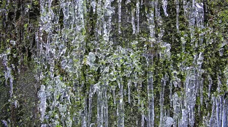 mrożonki : Wall of Green Moss with Frozen Icicles and Water Dripping Textured Background 1080p