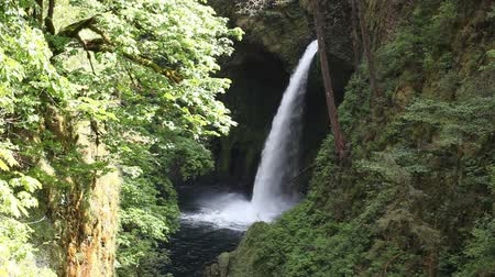 sas : Movie of Metlako Falls on Eagle Creek in the Columbia River Gorge in Hood River County Oregon United States 1920x1080 Stock mozgókép