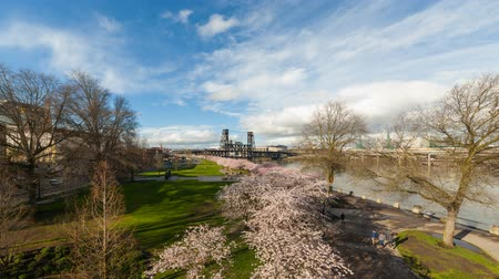 barışçı : Tme lapse movie of foot traffic freeway traffic and white clouds over downtown city of Portland Oregon along Willamette River with Sakura Cherry Blossom Trees blooming one Spring day 4k Uhd