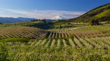Time lapse movie of moving clouds and sky over snow covered Mt. Adams and rolling hills landscape pear orchards in Hood River Oregon spring season 4k uhd