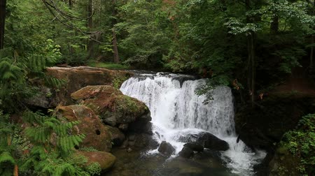 High definition 1080p movie of Whatcom Falls in Bellingham WA with water gushing audio sound Стоковые видеозаписи