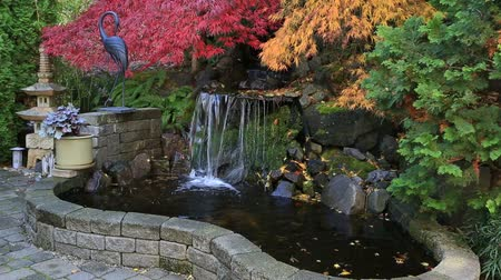 High definition zooming out video of red and green laced maple trees over water feature in backyard brick patio garden in colorful autumn season 1920x1080 HD Стоковые видеозаписи