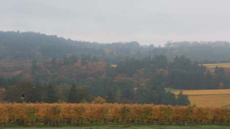 Panning video of expansive view of beautiful hills of vineyards in Dundee Oregon during colorful fall season 1080p HD