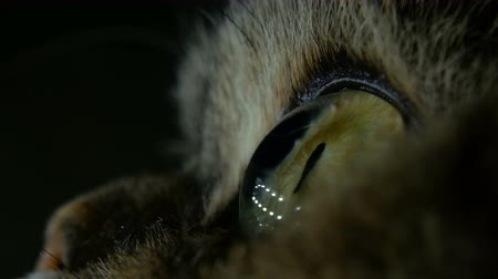 a beautiful green, yellow cat eyes in the super macro blinking on a black background