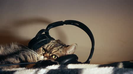 cute fluffy beautiful tabby cat listening to music in big headphones, enjoying life, resting