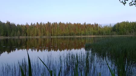 contorno : Beautiful finnish lake with green forest background Stock Footage