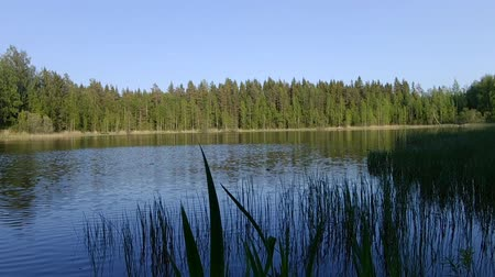fince : Beautiful finnish lake with green forest background Stok Video