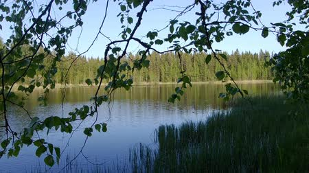 フィンランド語 : Beautiful finnish lake with green forest background 動画素材