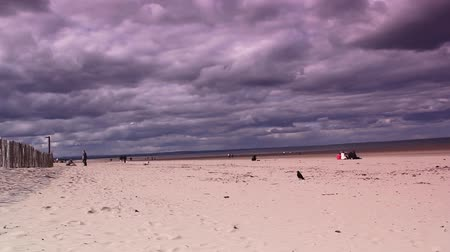 fife : The crow at the dreamy,West sands beach in St Andrews, Scotland, UK. HD footage Stock Footage