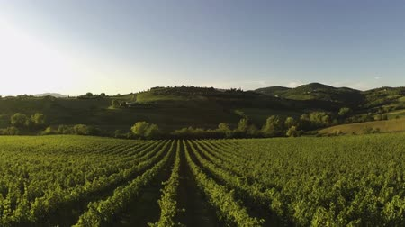 winnica : flying over an vineyard in Tuscany Italy
