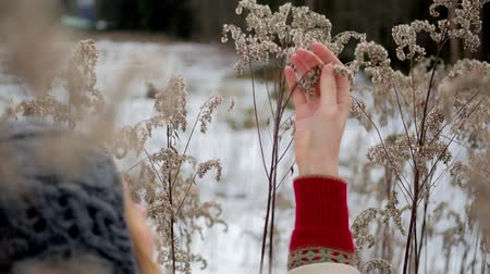 csodálkozás : girl touched the frozen grass in winter forest
