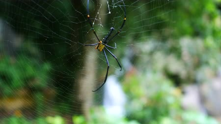 паук : yellow black spider sitting on cobweb