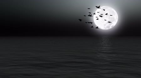 birds flying : Birds flying over calm sea at night Stock Footage