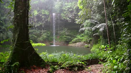 ormanda yaşayan : Waterfall at borneo rainforest in rainy day