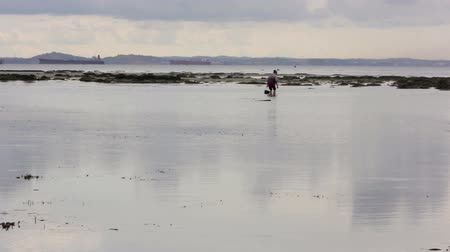 salt bed : people gathering oyster during low tide Stock Footage