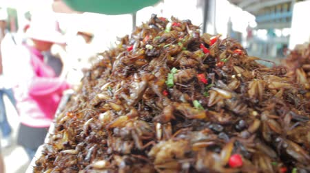 bugs : notorious bug eating of asia Stock Footage
