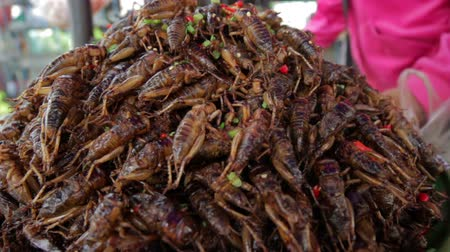 fry : notorious bug eating of asia Stock Footage