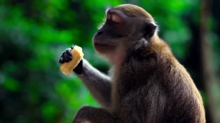 monkey temple : monkeys in batu cave temple in malaysia