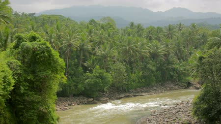 délkelet Ázsia : exotic jungle with palm trees and river in indonesia Stock mozgókép