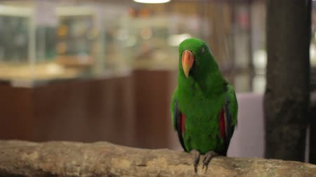 floresta tropical : parrot bird Stock Footage