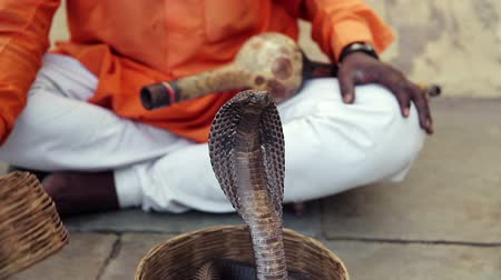 змей : Cobra enchanter sitting in the street charming his snake