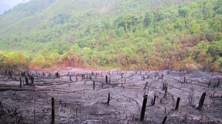 combusted : Deforestation, after forest fire, natural disaster, Laos Stock Footage