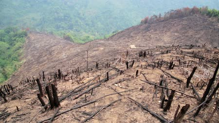 after fire : Deforestation, after forest fire, natural disaster, Laos Stock Footage