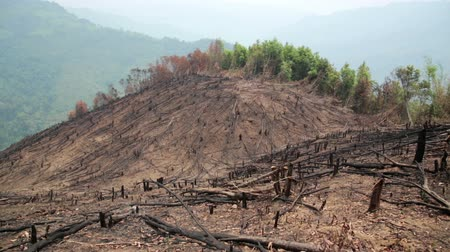 spunk : Deforestation, after forest fire, natural disaster, Laos Stock Footage