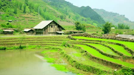 travel tropical : gorgeous farm fields, rice paddy terraces, Sapa, Vietnam Stock Footage