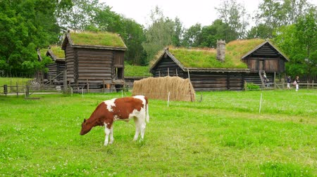 nações : animal husbandry livestock breeding, norwagian village, green grass rooftop, norway