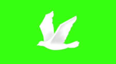 dove of peace : Flying white bird on green screen.This is the traditional 2D animation which can play seamless loops perfectly. Stock Footage