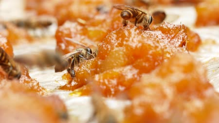 улей : Bees find nectar on mango jam under the strong sunlight