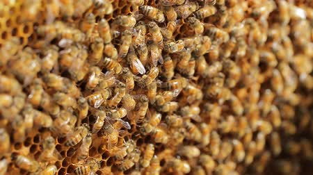 worker bees : Bees find food and keep in White bee boxes Selective Focus. Stock Footage