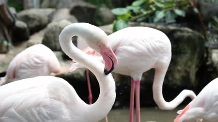 flamant rose : Gros plan, flamants roses, zoo