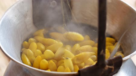 silkworm : Boiling yellow silkworm cocoons by boiler to make silk thread.