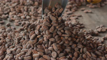 pralina : Selection of completed cocoa seeds must be dried before into sacks Vídeos