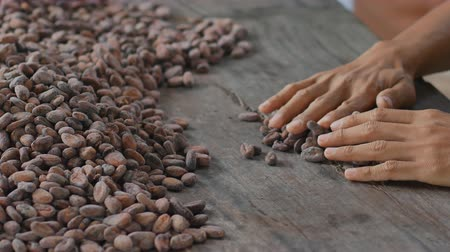 de ativos : Selection of completed cocoa seeds must be dried before into sacks Stock Footage