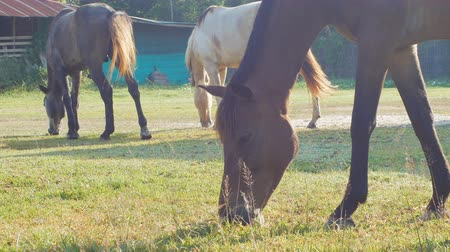kısrak : horses are grazing on grass in the meadow in the countryside