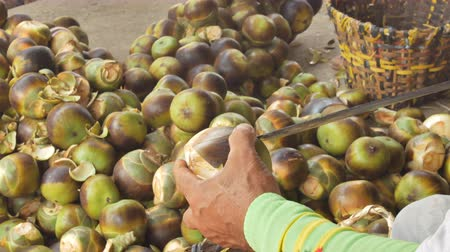 gyárt : Man Using Knife To Cut Open Toddy Palm Fruit.