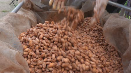 pudełko : Cocoa beans are fermented in wooden boxto develop the chocolate flavor.