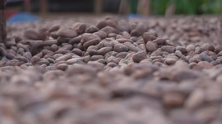 összetevők : Slow motion Dried cocoa beans under the sun and Cocoa beans selection.