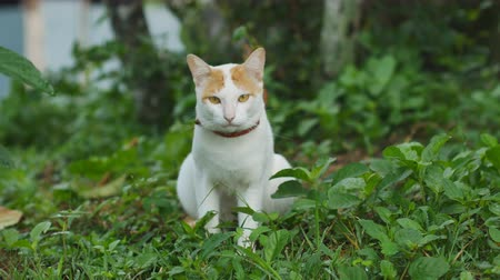 kotki : A cat looking at camera on the grass background. Wideo