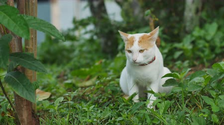 olgun : A cat looking at camera on the grass background. Stok Video
