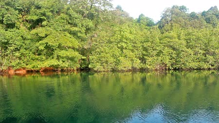 yumuşaklık : river and reflection green forest in morning thailand Stok Video