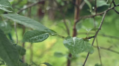 Regen druipt in de tuin Stockvideo
