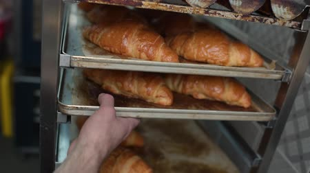 croissants : The bakers hand takes out an iron baking sheet with fresh baked goods - croissants